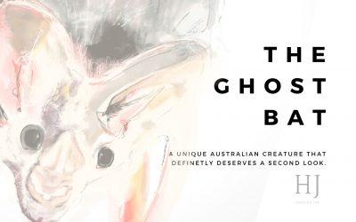 The Ghost Bat – Rare Australian Animals